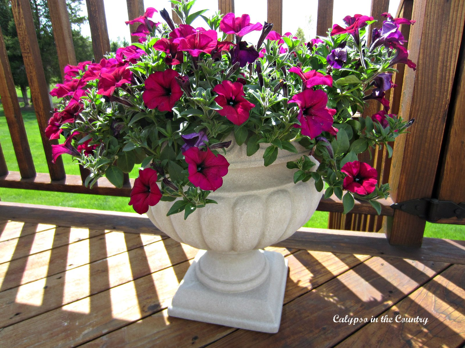 Flowers on the Deck – Helpful Tips for Container Gardening