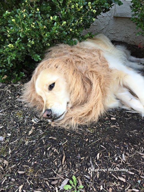 October…Out Like A…Lion?