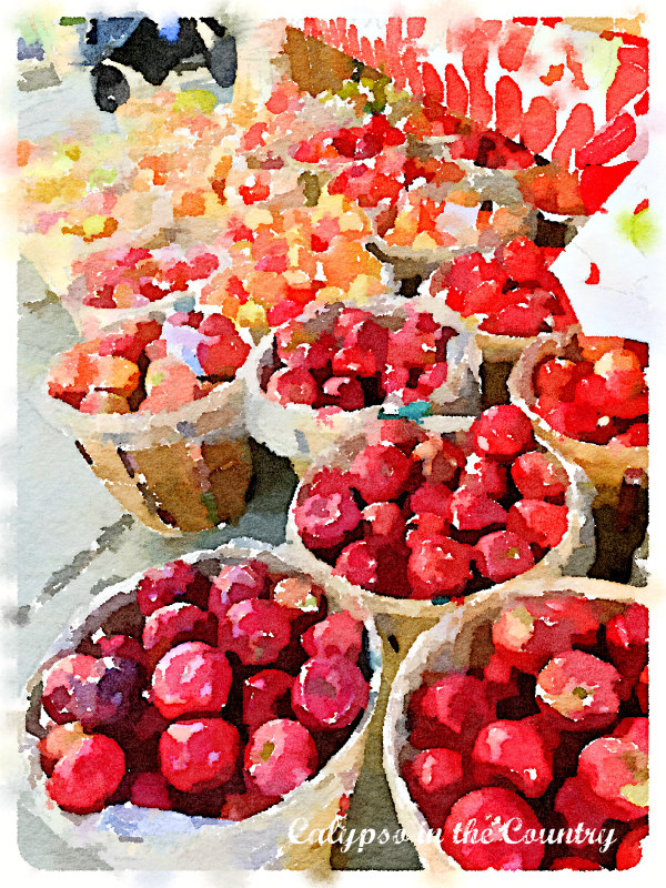 Watercolor of red apples in baskets
