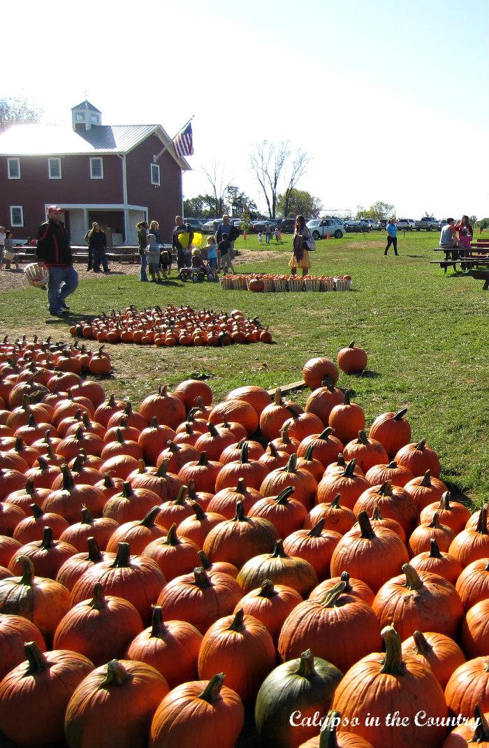 Orange Pumpkins for Halloween