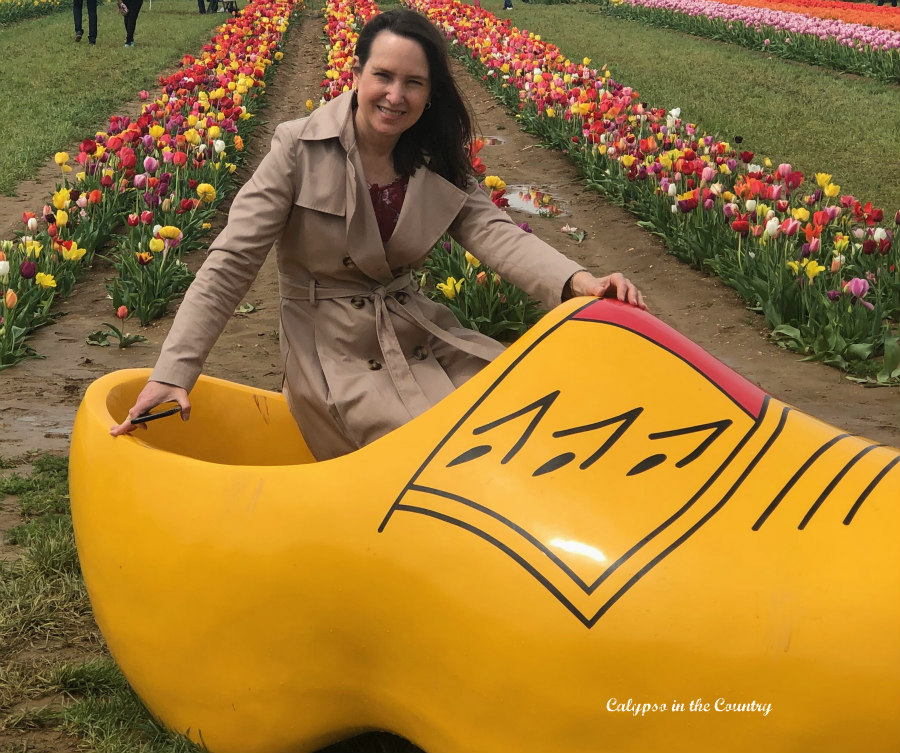 Yellow Dutch Shoe at Tulip Farm