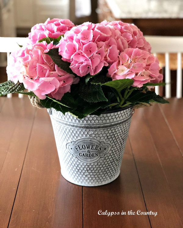 pink hydrangeas in metal container on table