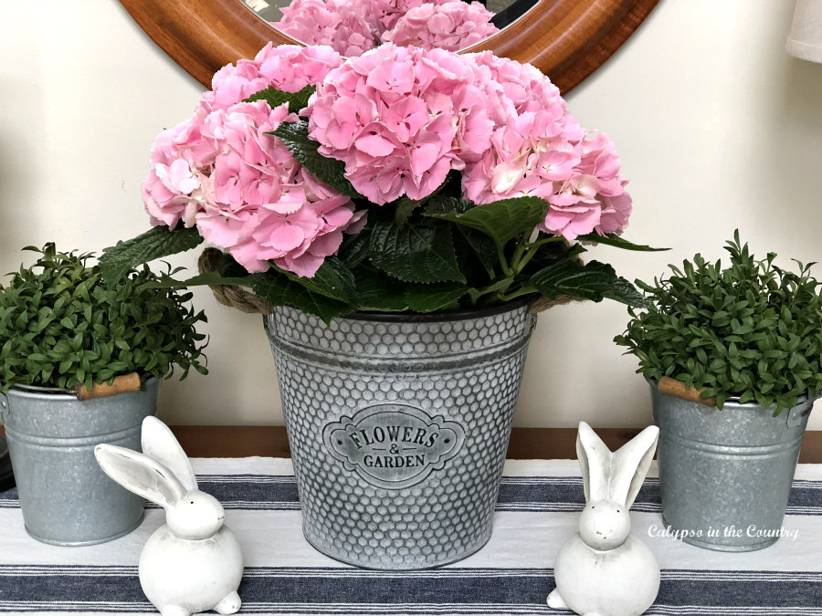 Metal bucket with pink hydrangeas