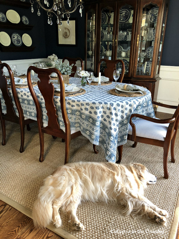 Navy Dining Room with Golden Retriever