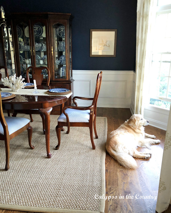 Navy Dining Room with Golden Retriever by the window