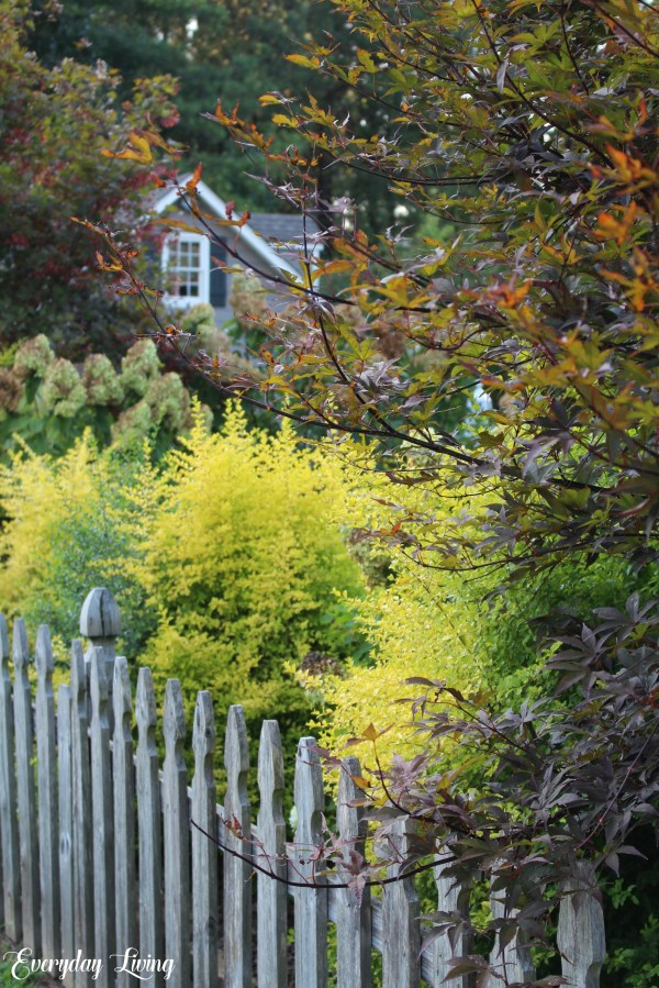 Mid September Gardening