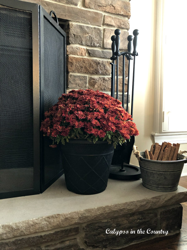 Mums by the fireplace - Warm and Cozy Thanksgiving at Home