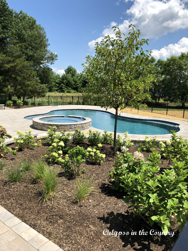 Free form pool and landscaping - simple summer pleasures