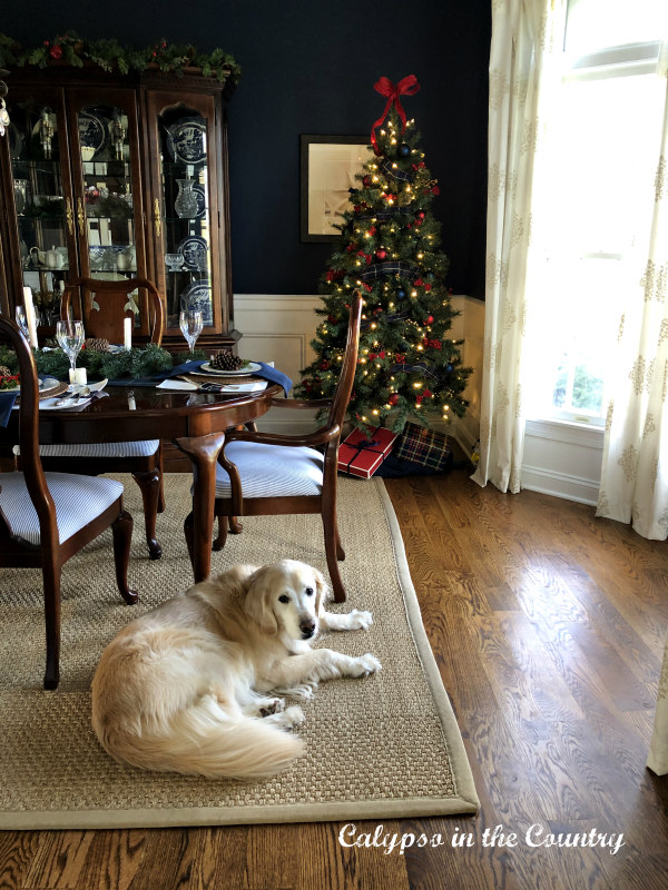 Golden Retriever with Christmas tree in background
