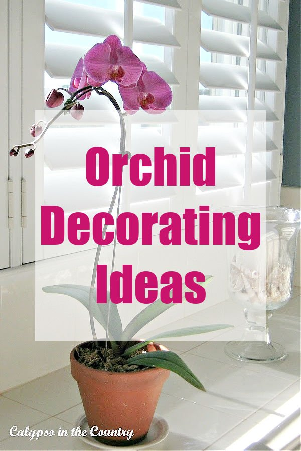 Orchid decorating ideas