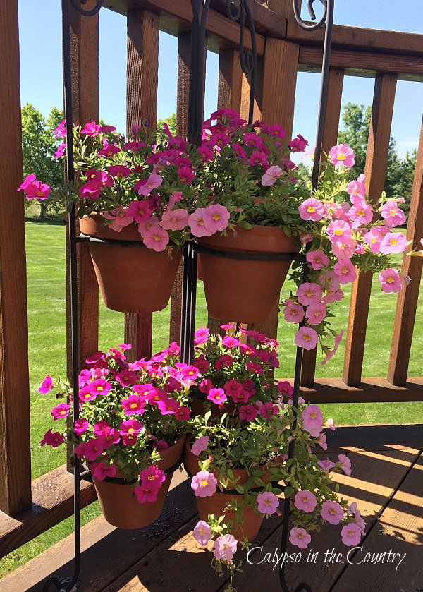 petunias on plant stand - summer gardening ideas