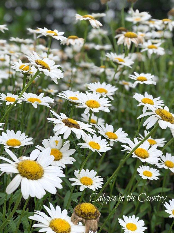 Summer Flower Gardens – Saturday Spotlight
