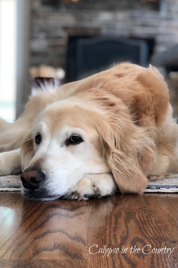 Let's Celebrate National Dog Month! (Saturday Spotlight)