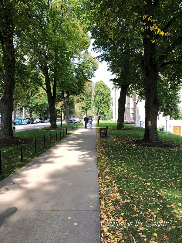 sidewalk and falling leaves - hello october 2021