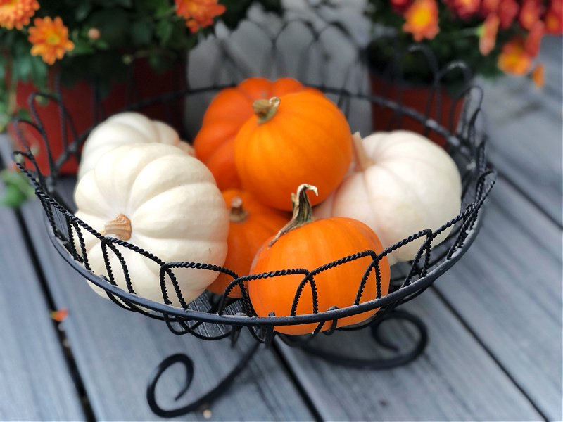 white pumpkins and orange pumpkins in wire bowl - how to decorate with pumpkins for fall